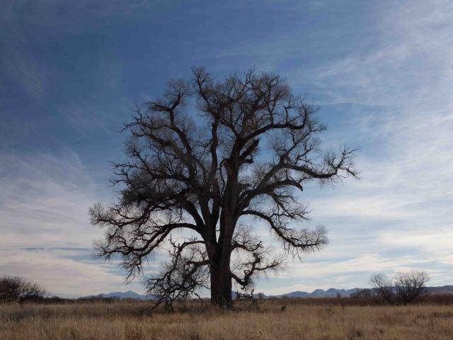 tree-0485