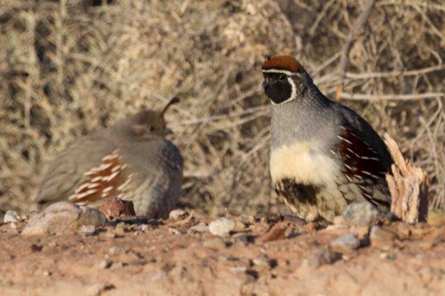 cold quail-2575