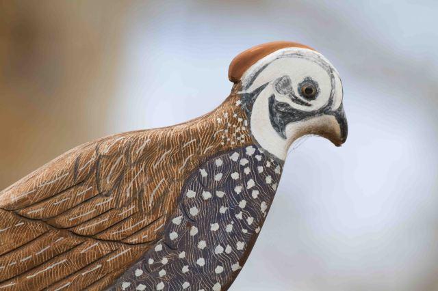 quail-3833
