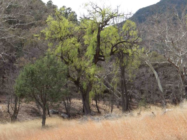 tree 2-1134