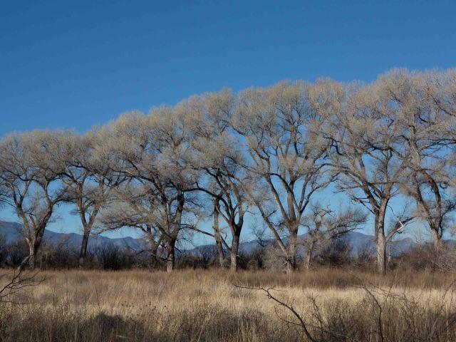 trees-0526
