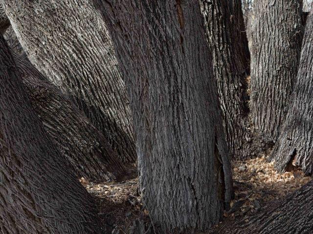trees-0528
