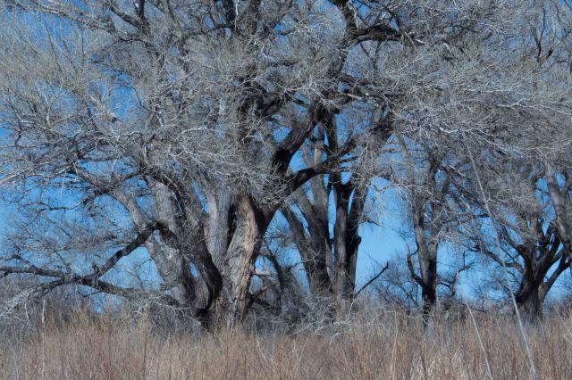 trees-0855