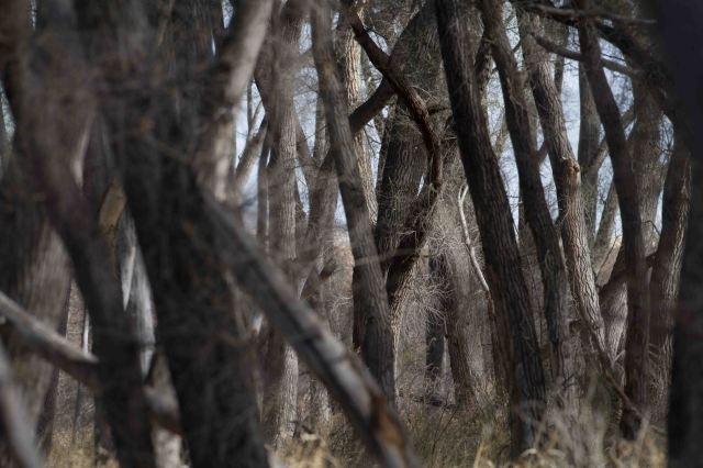 trees-4632
