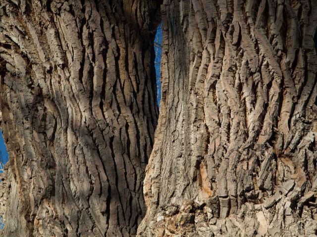 trunks-0517