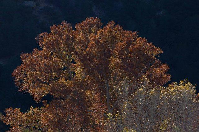 fall3-8539
