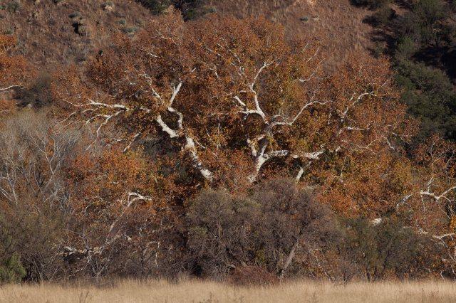 trees-8541