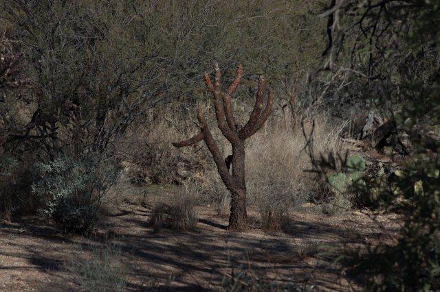 cactus2-8997