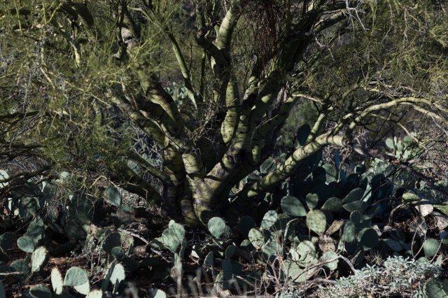 cactus4-8981