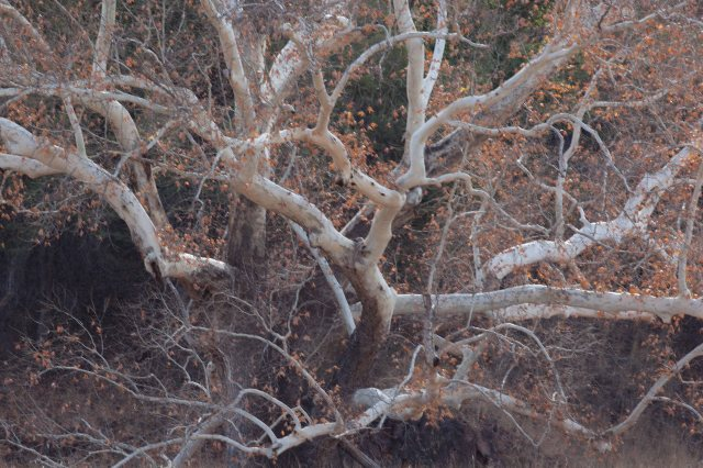 tree1-8675