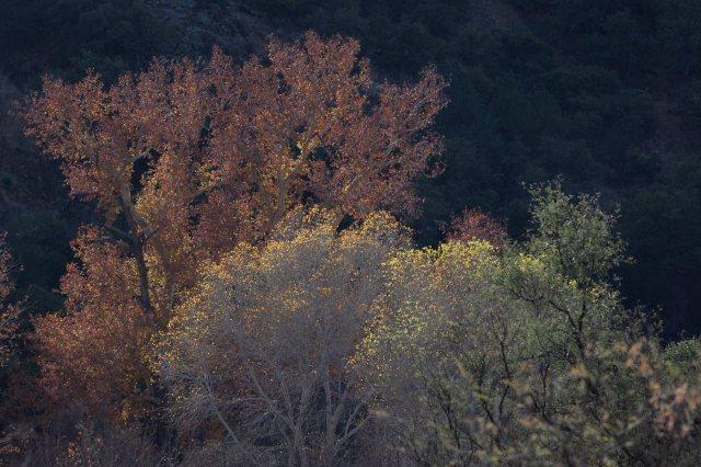 tree2-8651