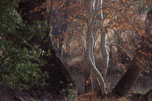 tree3-8640
