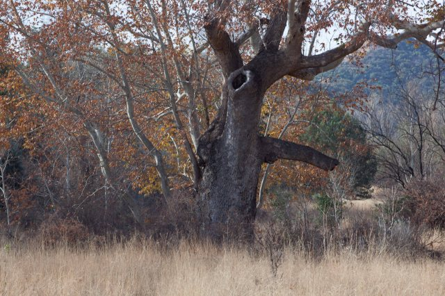 tree4-8634