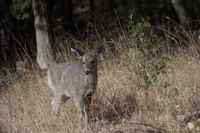 deer-1264