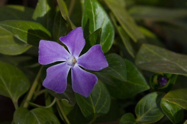 flower-1908