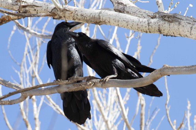 love birds-1036