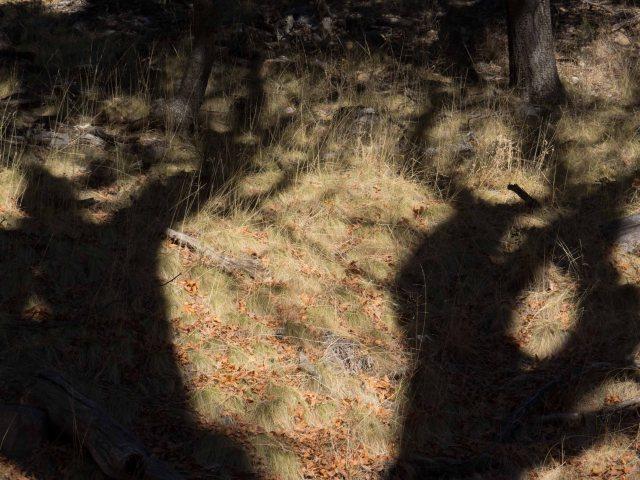 shadows-1683