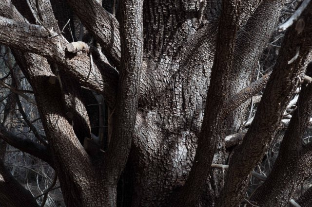 tree1-9982