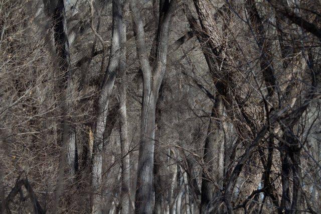 trees-1713