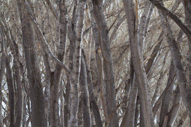 trees-1924