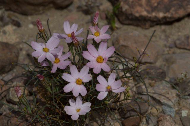 flower1-3952