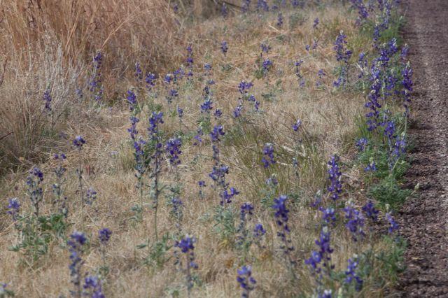 flowers-0384