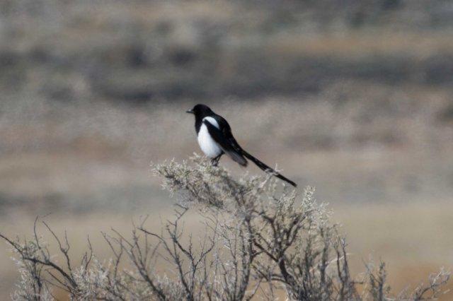 bb bird-5856