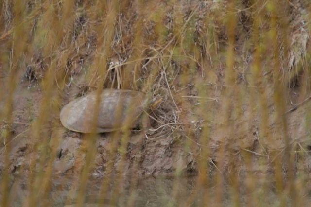 hidden turtle-5059
