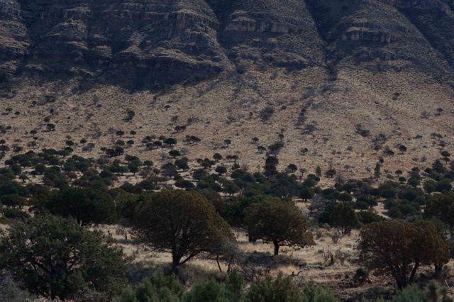 landscape2-0425