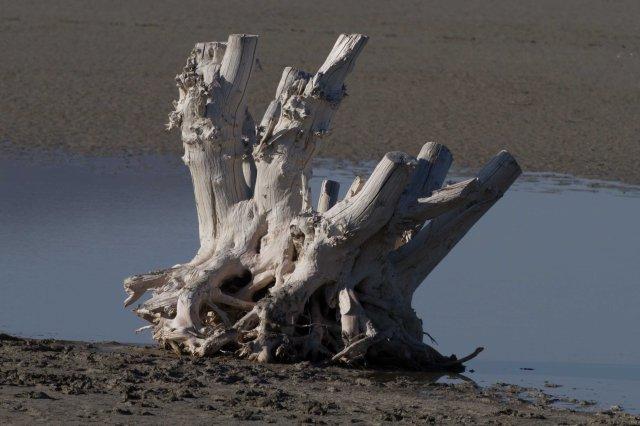 mystery tree-5699