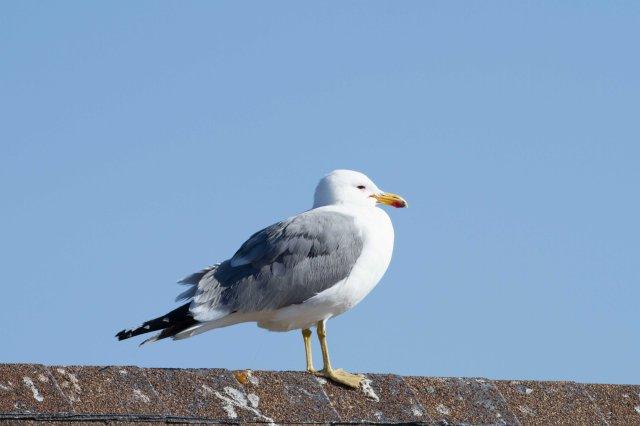 spring bird-5801