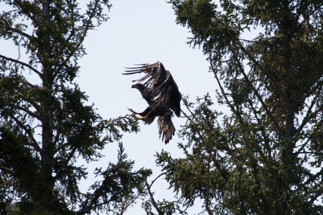 eagle lands-1