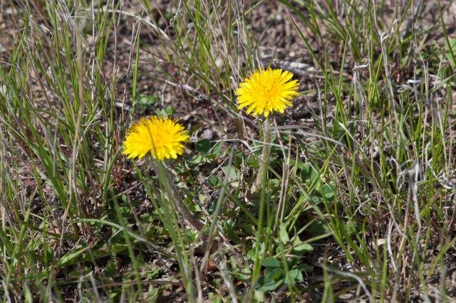 spring-1076