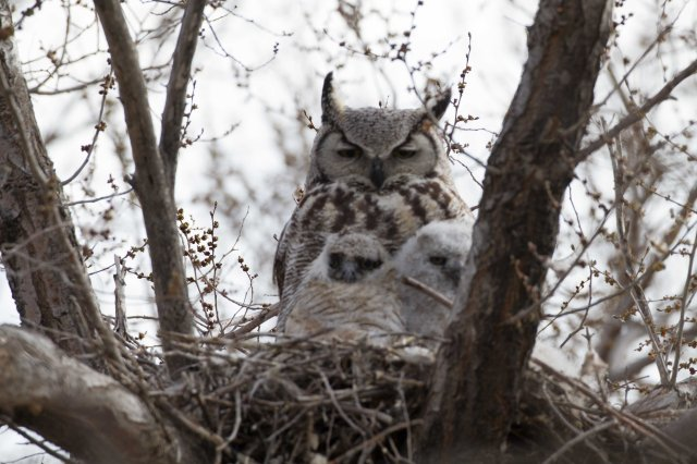 well, owls-7346