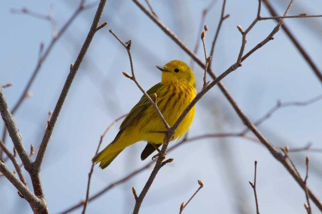yellow1-7611