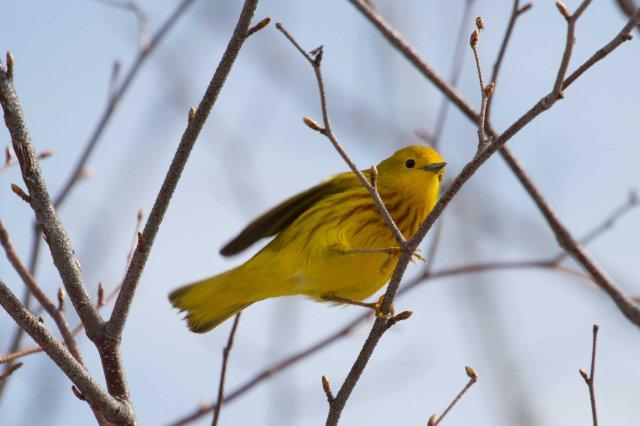 yellow2-7600