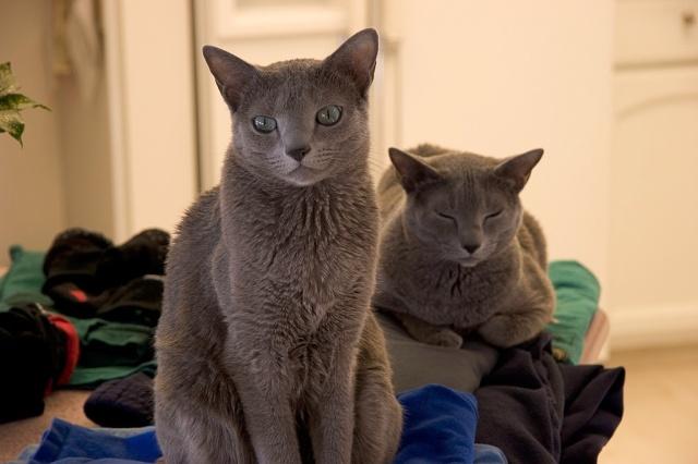 cat psd